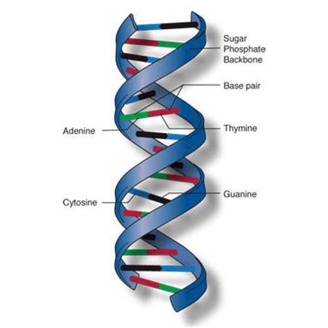 Mutation Essays - ManyEssayscom